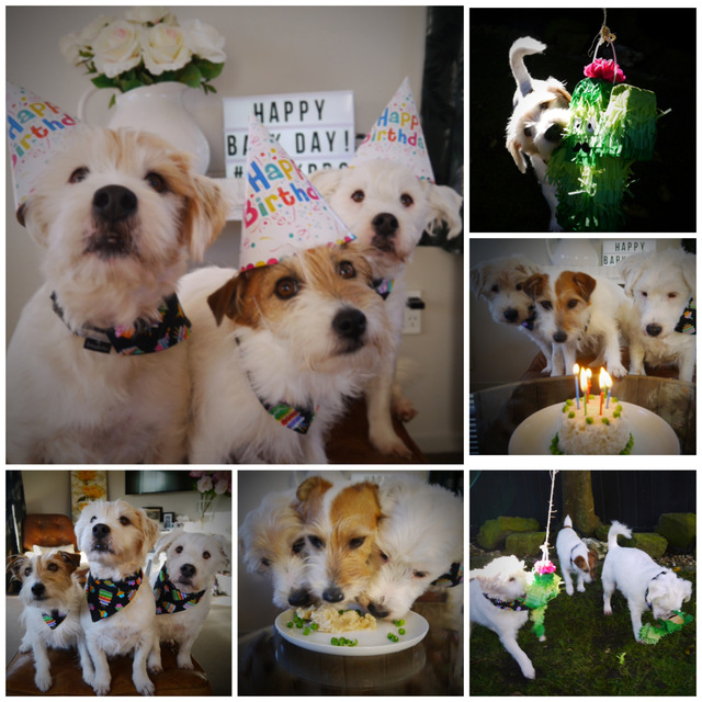 Finn's Fables: BArkday Celebrations